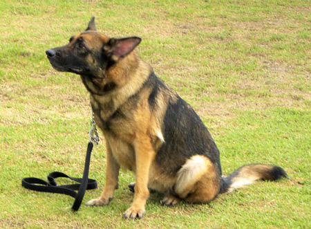 perro policial testimonio presencia real